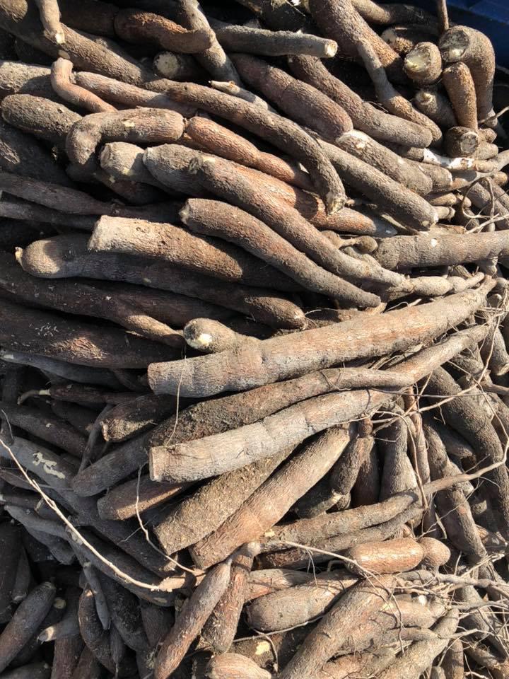【食用木薯】20公斤